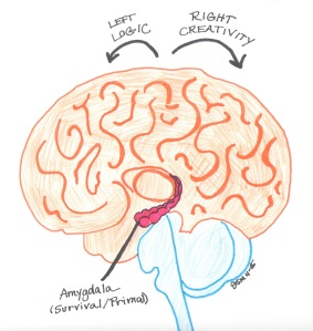 Rough Brain Drawing by Jennifer Miller